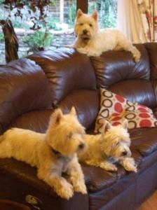 Angus, Frazer and Skye