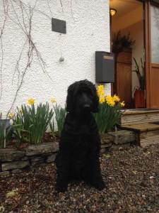 Sadie Pet Guest at Craik Na Dav B&B Loch Ness