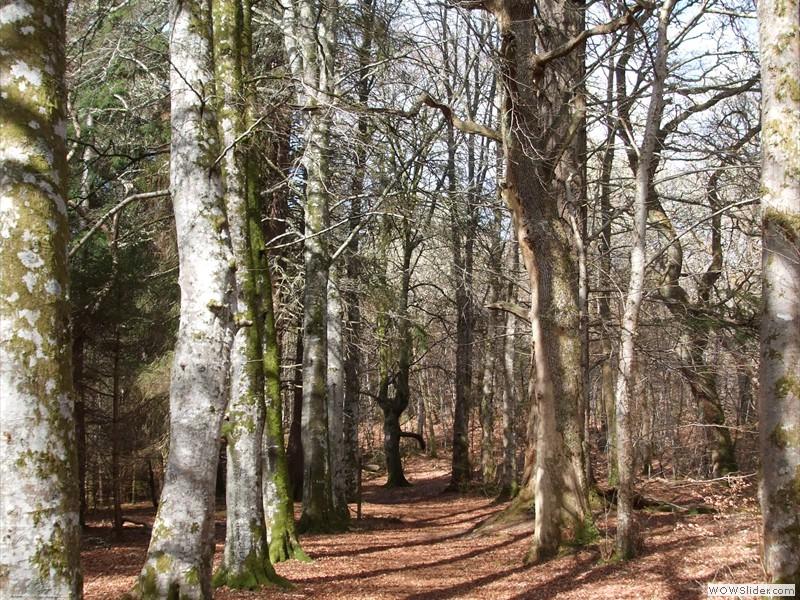Woodland River Walk